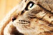 Cat's namlu closeup gri — Stok fotoğraf