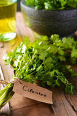 Cilantro on table close-up — Stock Photo