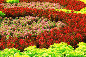 Flowerbed background — Stock Photo