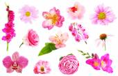 Collage of beautiful pink flowers — Foto de Stock