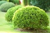 Lush bushes — ストック写真