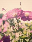 Bellissimi fiori in giardino — Foto Stock
