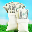 Lot of one hundred dollar bills in bags on grass on natural background — Stock Photo #55209681