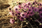 Beautiful wild flowers on straw close-up — Foto de Stock