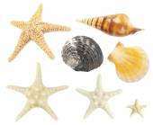Collage of shells isolated on white — Stock Photo