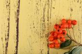Ashberry on yellow wooden background — Stock Photo