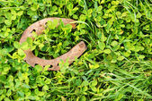 Old horse shoe — Stock Photo