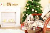 Cute cat on rocking chair in the front of the fireplace — Foto de Stock