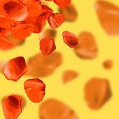 Falling rose petals — Stock Photo