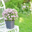 Lilac flowers on wicker chair on green garden background — Stock Photo #55637129