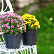 Yellow and lilac flowers in pots on wicker chair on garden background — Stock Photo #55637149