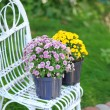 Yellow and lilac flowers in pots on wicker chair on garden background — Stock Photo #55637153