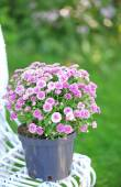 Lilac flowers on wicker chair on green garden background — Stock Photo