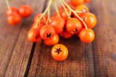 Ashberry on brown wooden background — Stock Photo