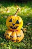 Halloween pumpkins on green grass — Stock fotografie
