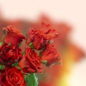 Bouquet of beautiful roses on light background — Stock Photo