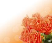 Bukett med vackra rosor på ljus bakgrund — Stockfoto