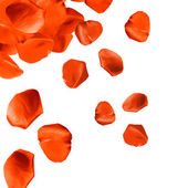 Falling rose petals close-up isolated on white — Stock Photo