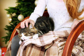 Woman and cute cat sitting on rocking chair in the front of the Christmas tree — Stok fotoğraf