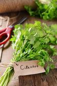 Green Cilantro on table — Stock Photo