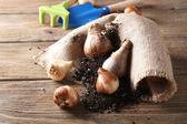 Flower bulbs and soil — Stock Photo