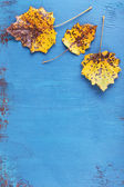 Yellow leaves on blue wooden background — Stock Photo