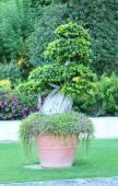 Garden planter with exotic tree  — Stock Photo