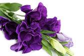 Beautiful violet eustoma close up — Zdjęcie stockowe