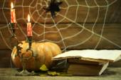 Halloween decoration with spider — Stock Photo