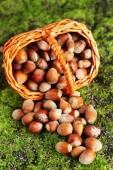 Hazelnuts in wicker basket, on green grass background — Stock Photo