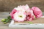 Beautiful eustoma flower — Stock Photo