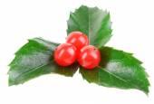 Leaves of mistletoe with berries — Stock Photo
