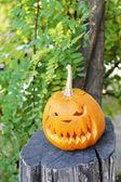 Pumpkin for holiday Halloween on old tree stump — Stock Photo