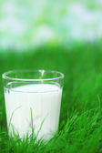 Milk in glass on grass — Stock Photo
