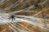 Cobweb with spider on wooden background — Stock Photo