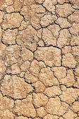Cracked ground background — Stock Photo