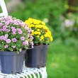 Yellow and lilac flowers in pots on wicker chair on garden background — Stock Photo #56684847