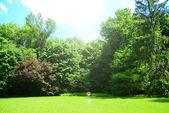 Beautiful park outdoors — Stock Photo