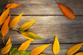 Autumn leaves on brown  background — Stock Photo