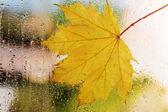 Autumn leaf on window — Stock Photo