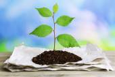 Plant growing from paper — Zdjęcie stockowe