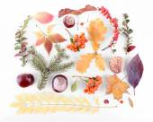 Leaves, chestnuts and ashberries — Stock Photo