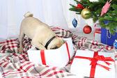 Pug dog  near Christmas tree — Photo
