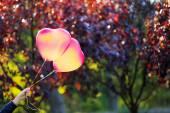 Balões de coração de amor — Fotografia Stock
