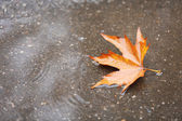 Autumn leaf in puddle — Stock Photo