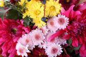 Beautiful autumn Flowers — Stock Photo