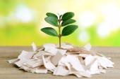 Plant growing from paper — Stock Photo