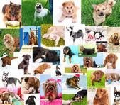 拼贴的漂亮的狗 — 图库照片