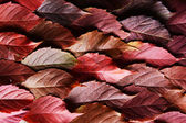 Autumn leaves texure — Stock Photo