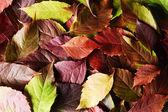 Autumn leaves texure — ストック写真